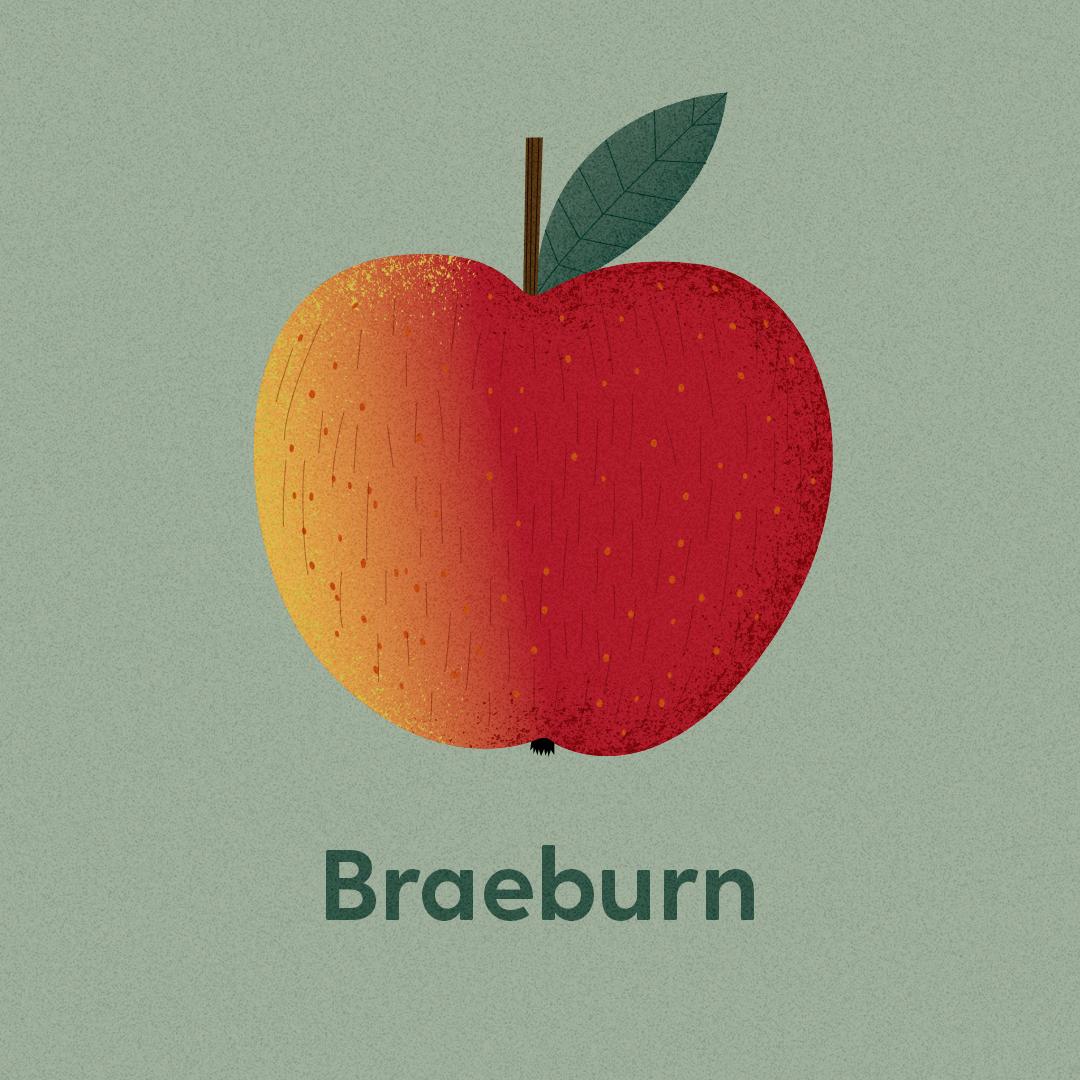 Illustrierte Apfelsorten Braeburn